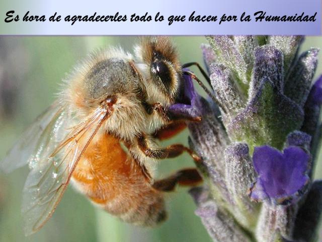 Haz algo por las abejas